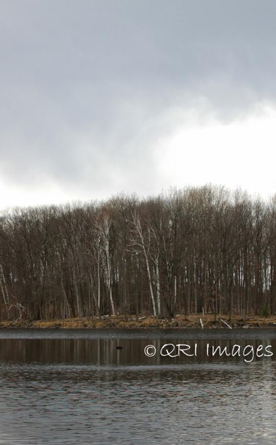 Bare Branches_ Landscape