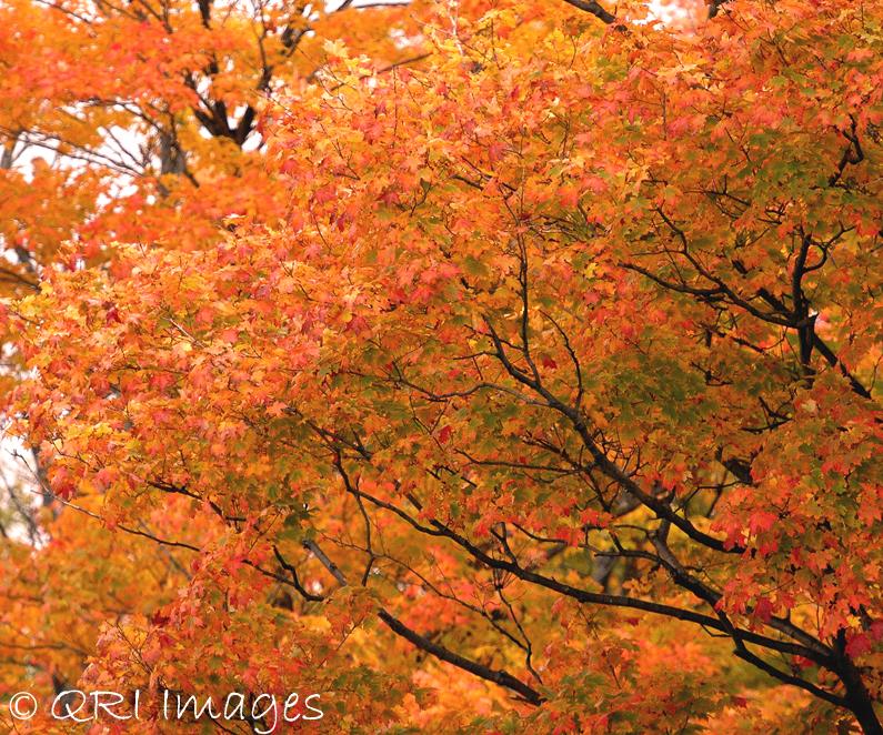 Brilliant orange canopy