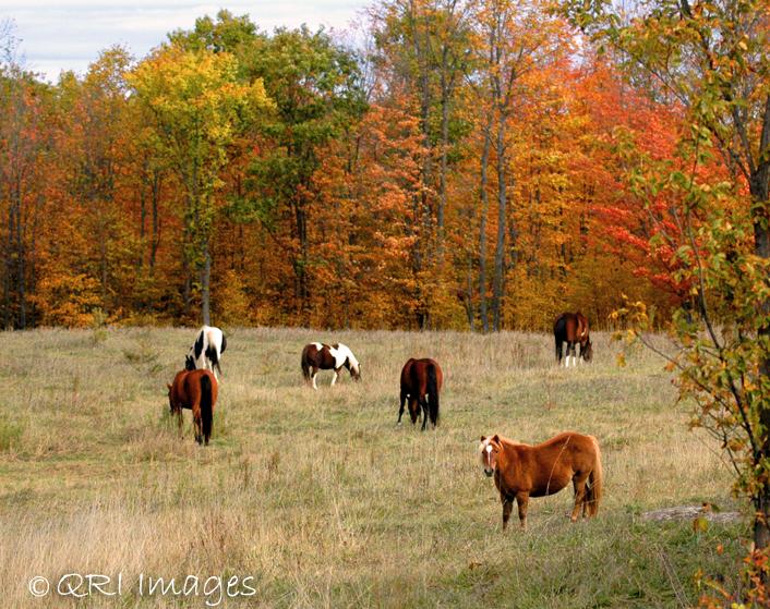 Horses - Fall backdrop